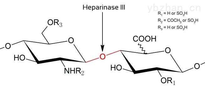 重组肝素酶III