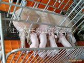 动物称重打印畜牧秤,猪羊称重防水动物秤